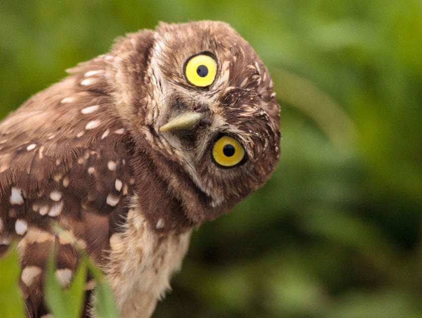Unhelpful thinking about depression makes me not give a hoot
