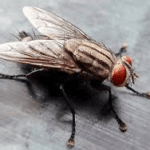 Are these house flies depression triggers for me?